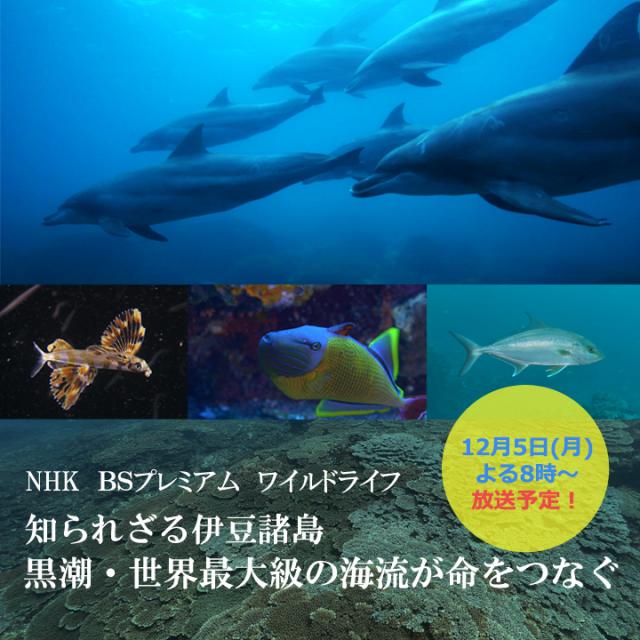 NHK ワイルドライフ 黒潮