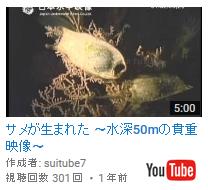「サメが生まれた~水深50mの貴重映像~」