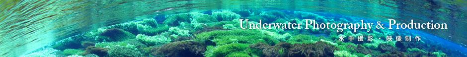 UnderwaterPhotography&Production