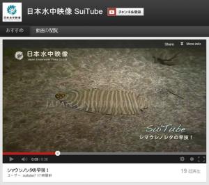 simausinosita Zebrias zebra