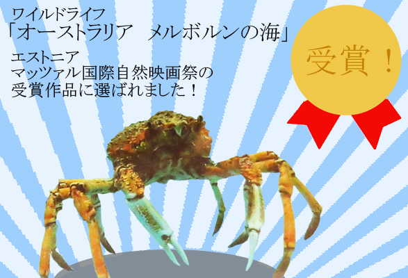 atsalu spidercrab