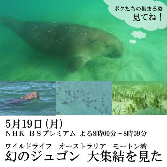 dugong oshirase