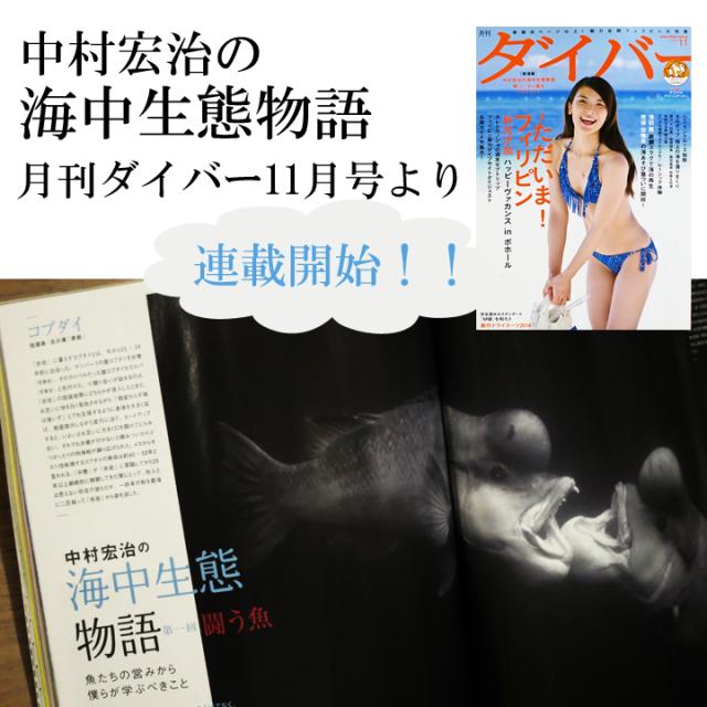 月刊ダイバー11月号