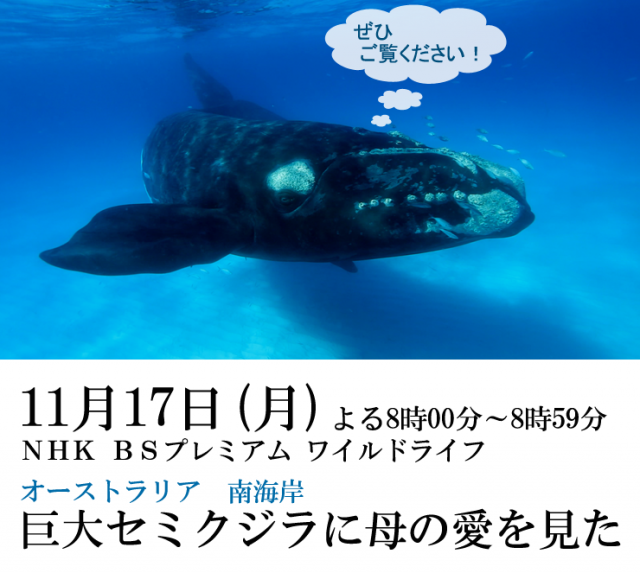 right whale oshirase