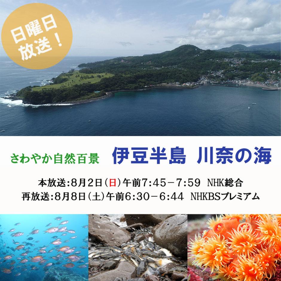 NHKさわやか自然百景「川奈の海」日本水中映像