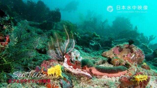 コモド諸島海域の海底